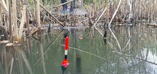 Рыбалка на КАРАСЯ в КАМЫШАХ с поплавком