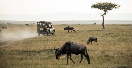 Стихия охоты в Африке