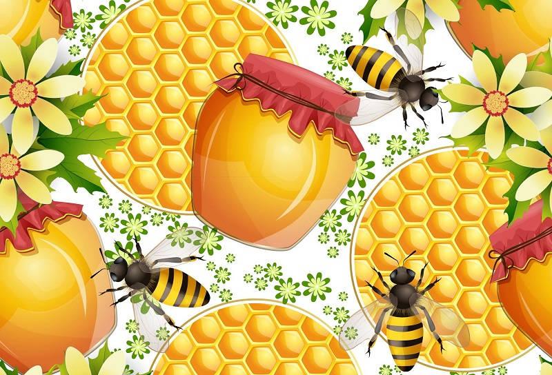 Мед: полезные свойства целебного нектара