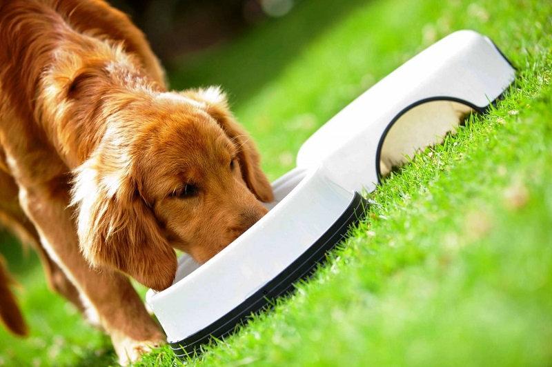 Питание собаки