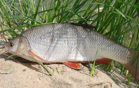 В поисках рыбы в жару летом