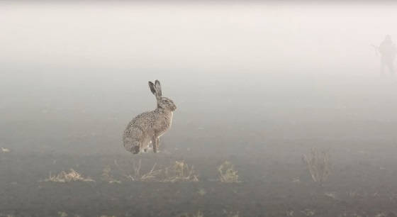 Заяц в тумане и фазаны из-под легавой