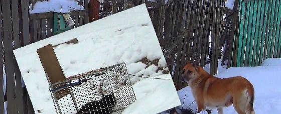 Две ловушки для осторожных животинок