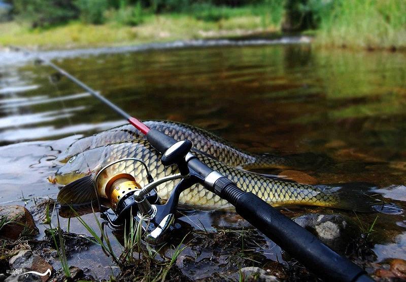 Хорошая удочка для рыбалки