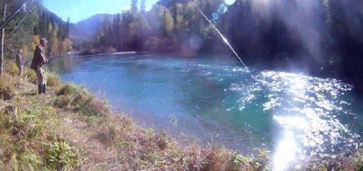 Катунь и хариус реки Кадрин