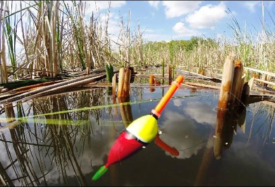 Ловля на заброшенном водоеме