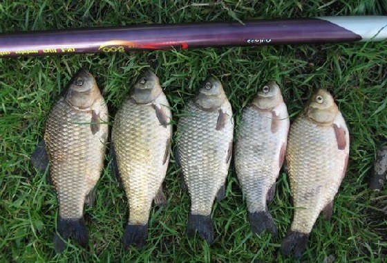 Уловистая снасть для ловли белой рыбы на спиннинг
