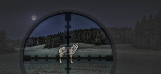 Выстрелы по волкам и шакалам