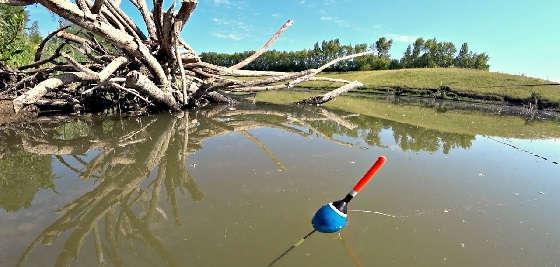 Поплавочная Рыбалка на утренней зорьке