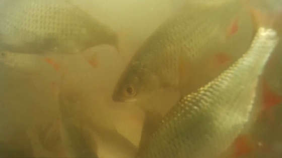 реакция рыбы на самодельную прикормку