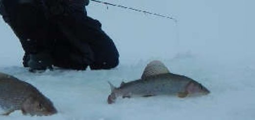 Рыбалка с ночевкой в дикой тундре