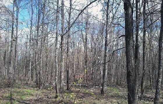 За майскими грибами в лес