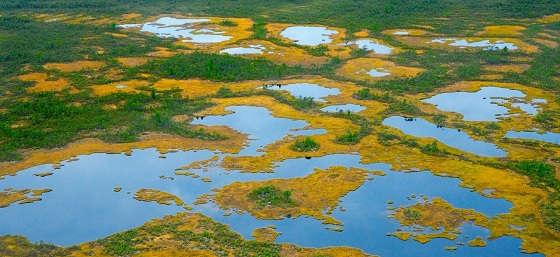 В дикие Сибирские болота за рыбой