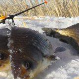 Снасть для ловли карася зимой