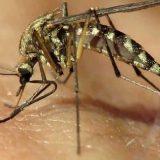 Как стать невидимым для комаров с помощью уловок