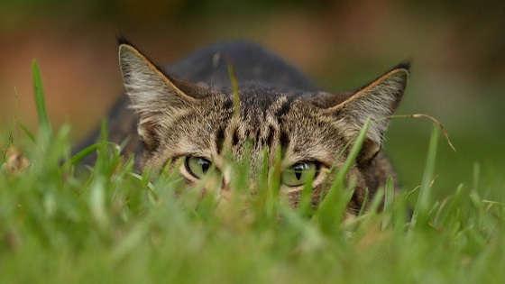 Лесной кот - мастер маскировки и эксперт в охоте
