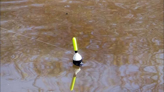 Ловля на маховую удочку с поплавком