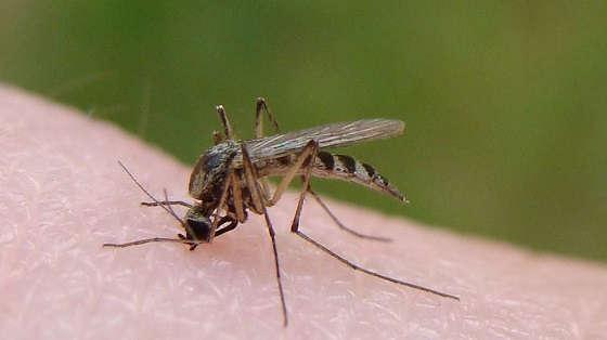 универсальное средство от комаров и мошек