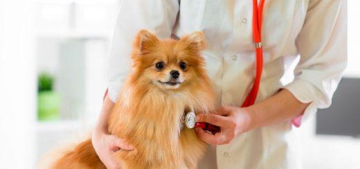 Ветеринарная помощь в Санкт-Петербурге