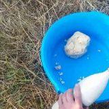 Рецепт каши для ловли толстолоба