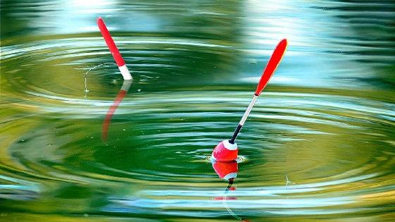 Рыбалка на поплавок на утренней зорьке