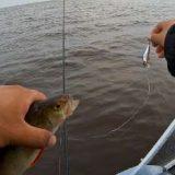 Рыбалка на Щуку и Окуня в Июле со спиннингом