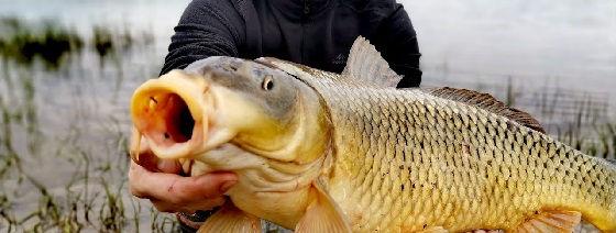 Ловля сазана на жмых Рыбалка в Астрахани 2020