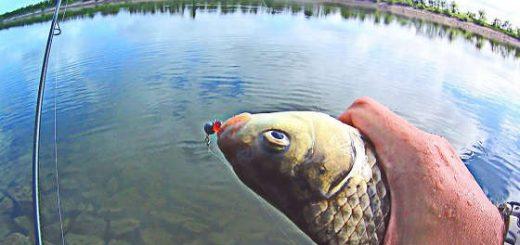 Ловля КАРАСЯ на спиннинг на Волго-Донском канале