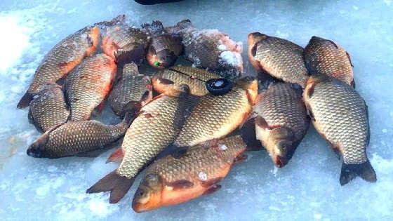 Ловля КАРАСЯ со льда на реке Днепр