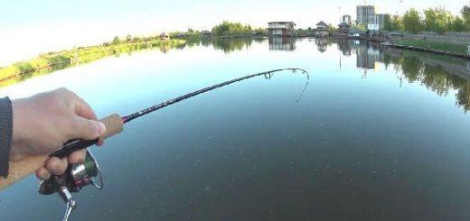 Как поймать карпа на спиннинговой рыбалке?