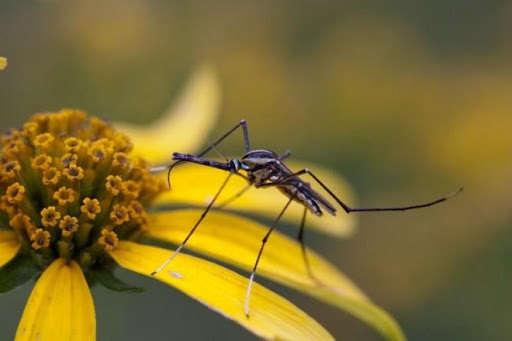 Топ убийственных ароматов против комаров