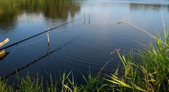 Как наловить леща на реке