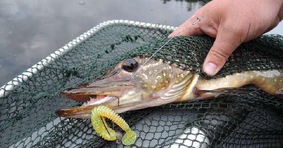 Рыбалка Летом на КРУПНЫЙ силикон