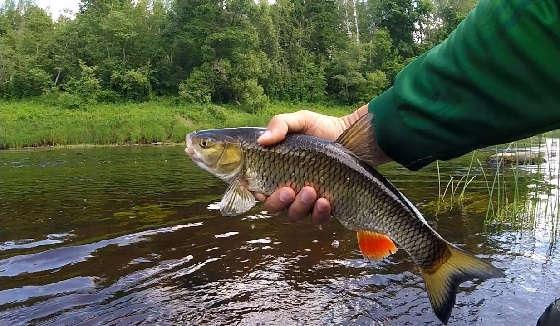 Рыбалка на реке Межа