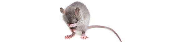 Простой и надёжный способ избавится от мышей