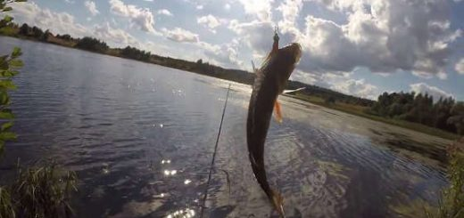 Ловля ОКУНЯ на МИКРУХУ в стоячей воде ЛЕТОМ