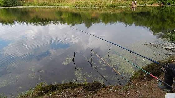 Рыбалка на поплавочную удочку на маленьком пруду