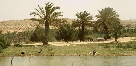 Рыбалка в пустыне