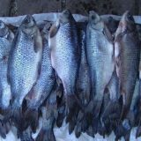 Как в Сибири рыбу солят