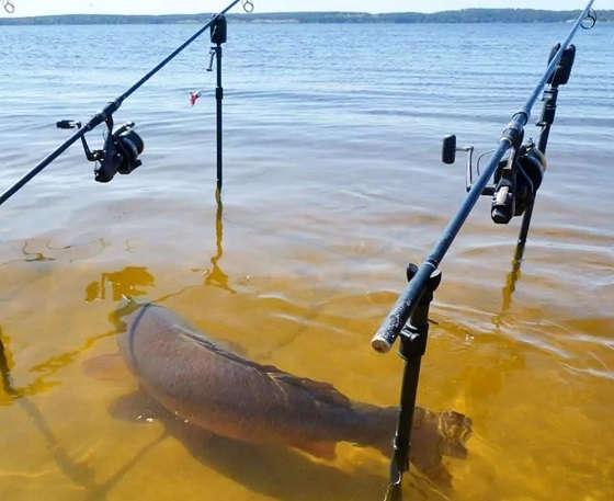 Рыбалка для души на Енисее
