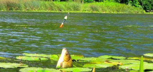 Рыбалка на КАРАСЯ на ПОПЛАВОК в ЗЕЛЁНЫХ Кувшинках