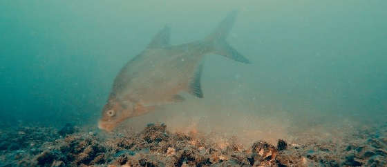 Ловля Леща Осенью: Прикормка и Подводная съёмка