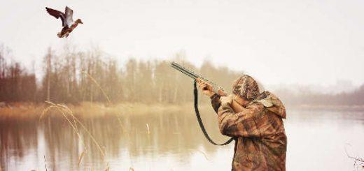 Охота на утку в Беларуси сентябрь 2020