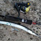Сарган: что важно знать о ловле на спиннинг