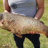 Рыбалка в Астрахани: Трофейный сазан