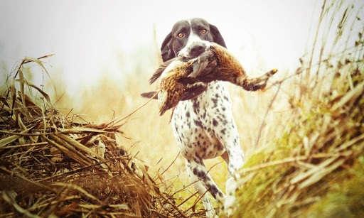 Как выбрать охотничий участок?