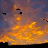 Упреждение при стрельбе утки