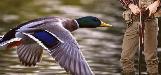 КАК ПРАВИЛЬНО ЦЕЛИТЬСЯ по птице?