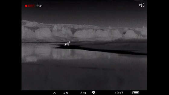 Ночная охота на копытных с тепловизионой камерой