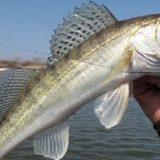 Рыбалка на СУДАКА с ТРОФЕЯМИ
